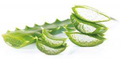 Jak pěstovat aloe vera? 100% osvědčené tipy na pěstování.