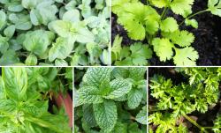 Účinné bylinky na hubnutí - 100% zrychlí metabolismus