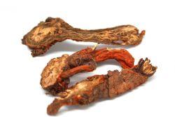 Šalvěj červenokořenná - kořen